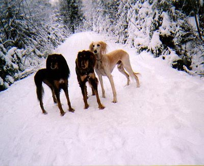 3 in the snow